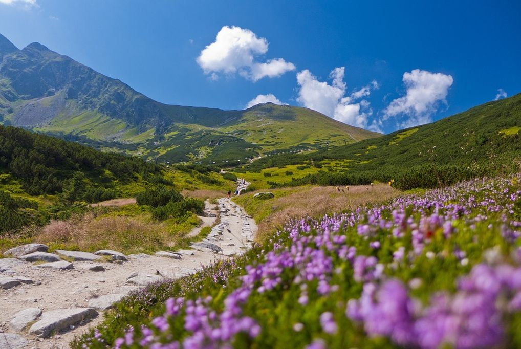 Tatragolf Mountain Resort kupon